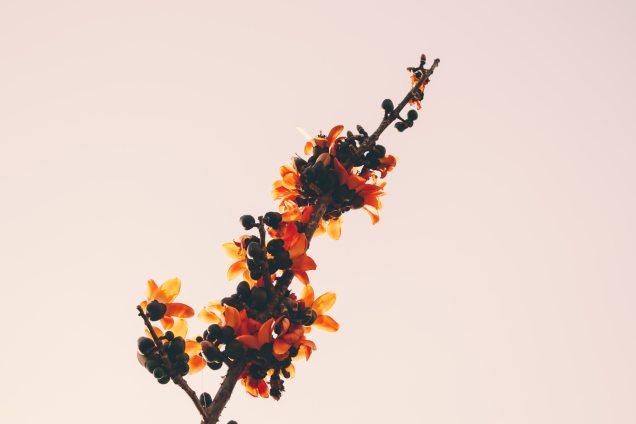 beautiful-bloom-blooming-325717